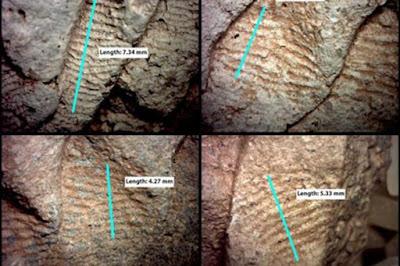 L'ampiezza dei segni delle impronte lasciate sulle ceramiche dell'XI secolo è stata utilizzata dai ricercatori per determinare il probabile sesso del vasaio.