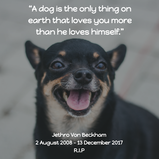 Selamat Jalan Jethro Von Beckham - Cross The Rainbow Bridge