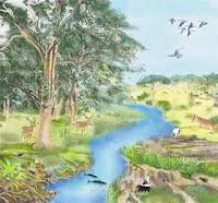 Ekologi berasal dari bahasa Yunani terdiri dari dua kata  Pengertian Ekologi