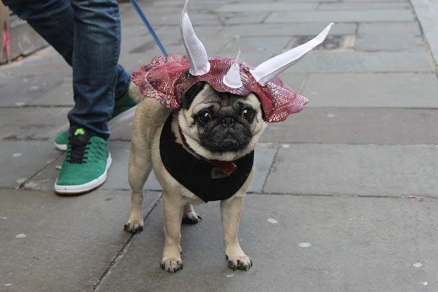 Howl-oween puppy parade Liverpool