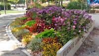 """Soluciones Florales  de Arribas Center-Barnaplant  """"La Fuente Luminosa 8 de Marzo"""" en el parque Miguel Servet de Huesca."""