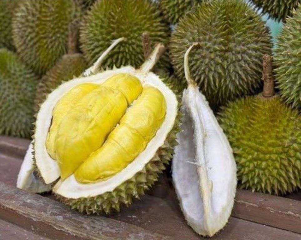 Bibit durian musang king Denpasar
