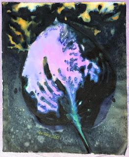 Hosta leaf, unrinsed wet cyanotype print, for Halcyon Days