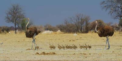6 Most Dangerous Desert Animals In The World