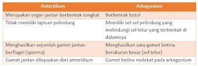 anteridium dan arkegonium