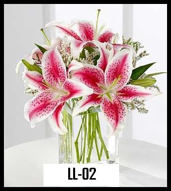 LL 02