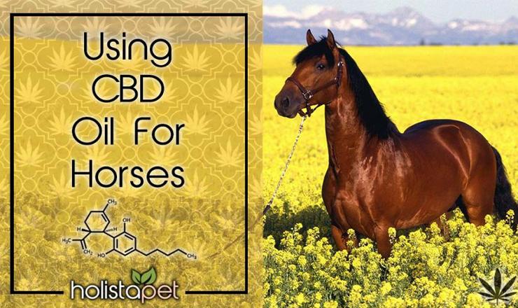CBD Horse Pellets-3000 Mg Hemp Pellets for Horses #infographic