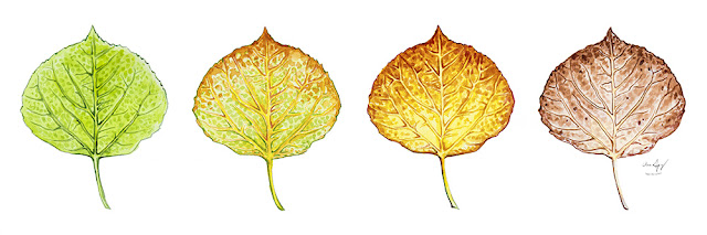 http://aaronspong.com/featured/aspen-leaf-progression-aaron-spong.html