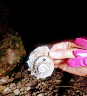 手のひらサイズの巻貝の殻を手にして見せる