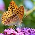 El confinamiento de los insectos. La biodiversidad y su conexión con el ser humano