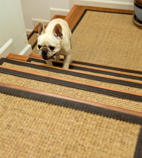 cães idosos subindo escadas