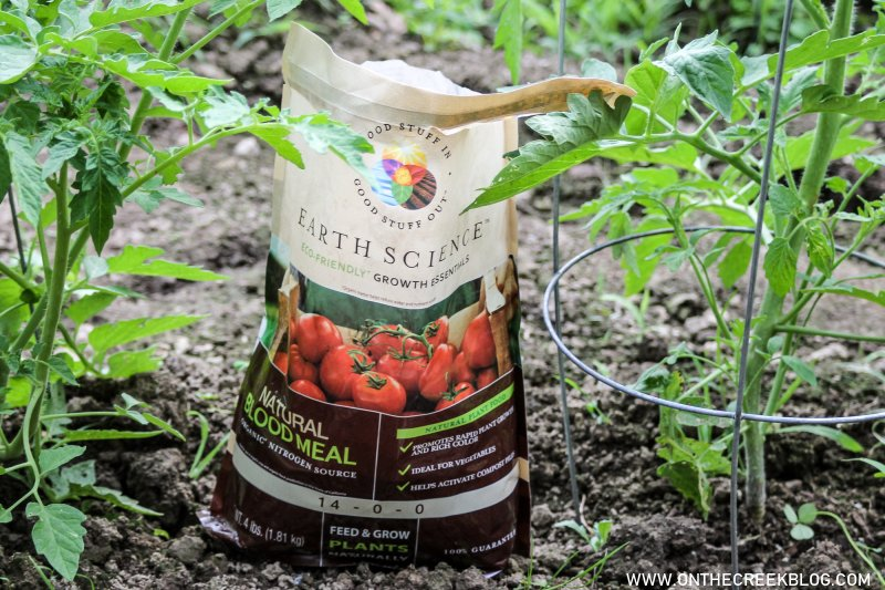 Using Natural Blood Meal on Tomatoes | On The Creek Blog