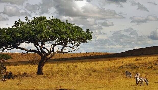 Ekosistem terestrial atau ekosistem darat