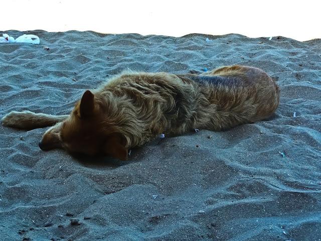 Foto perro durmiendo en la playa