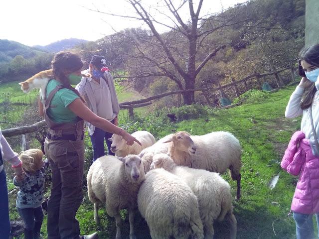 la guía nos habla de sus ovejas