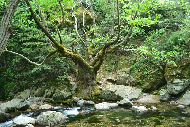 Alpler'den sonra dünyada en bol oksijene sahip Kazdağları'nı bir de sonbahar aylarında gezmelisiniz.