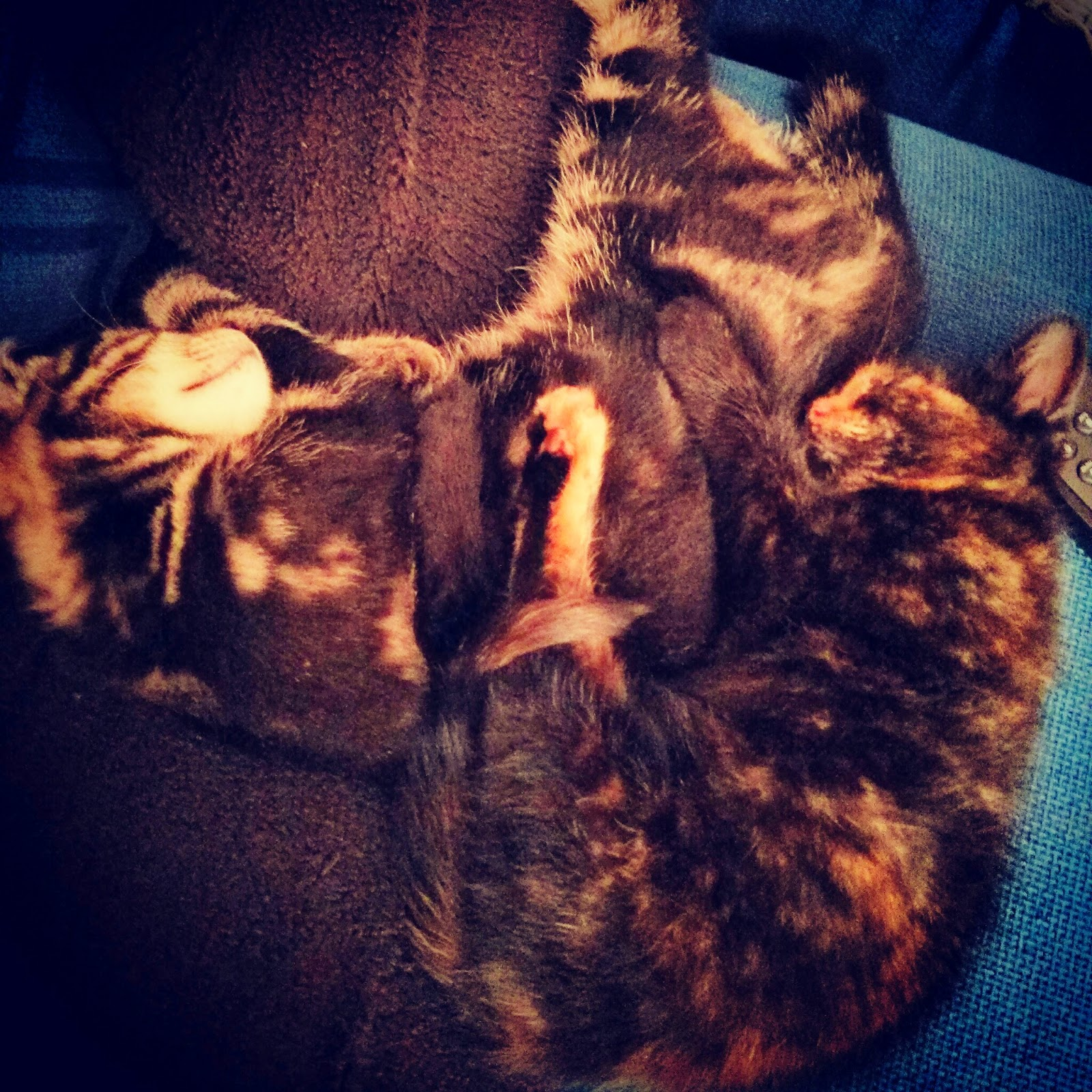 A tangle of kittens