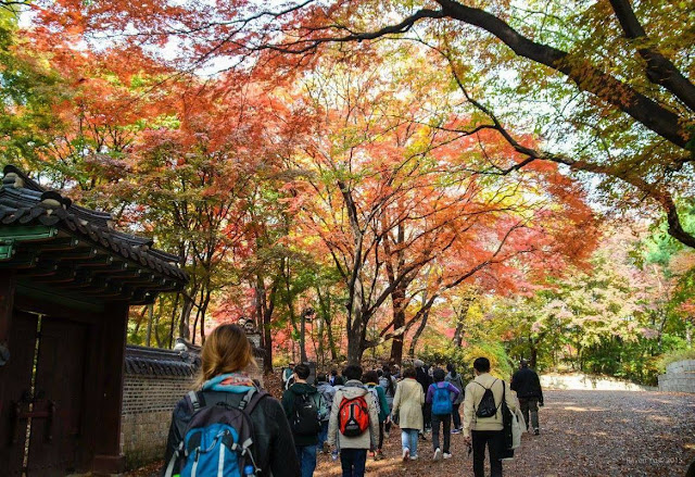 Khám phá mùa thu tại Hàn Quốc