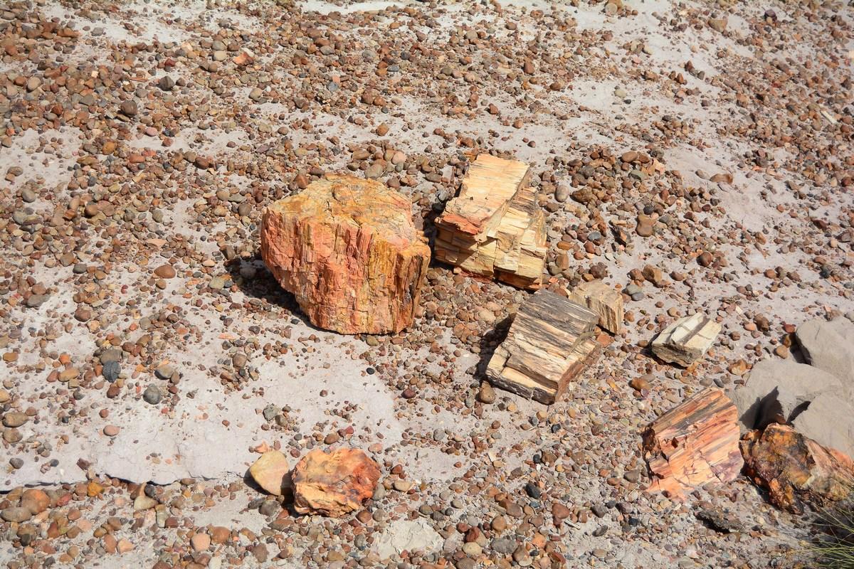 bois pétrifié Petrified Forest