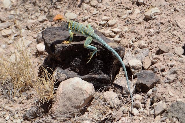 orange and green reptile