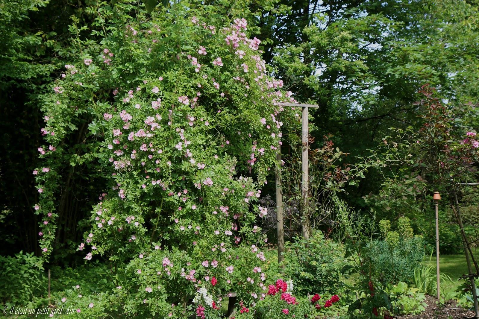 Il etait un petit jard 39 ain visite au jardin du clos for Jardin a visiter 78