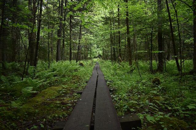 Lake George Hiking Trail Adirondack