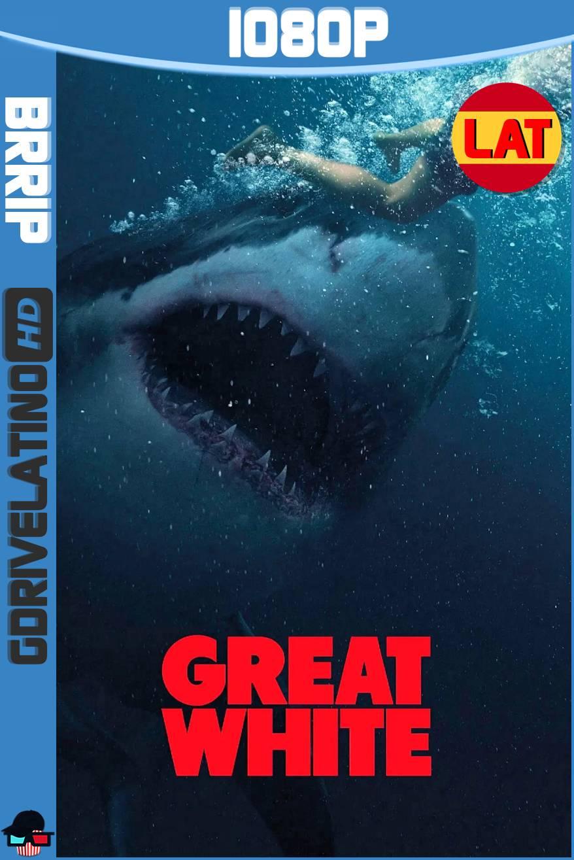 Tiburón Blanco (2021) BRRip 1080p Latino-Ingles MKV