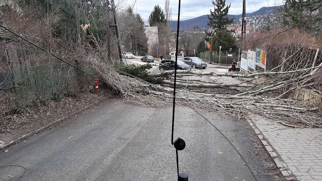 Vihar - Budapesten dőlt meg az országos szélrekord