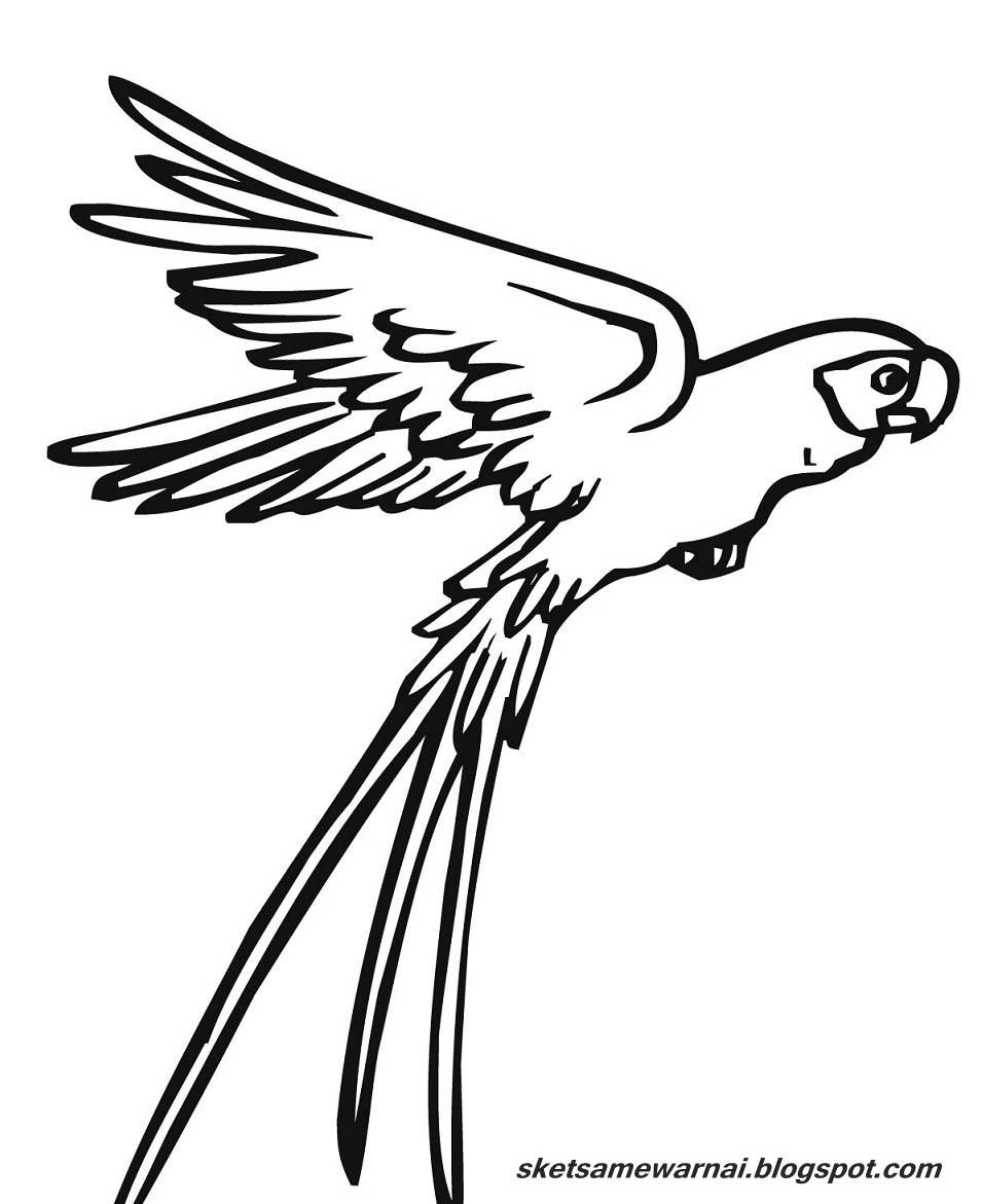 [Terlengkap!] Gambar Sketsa Burung Terbang