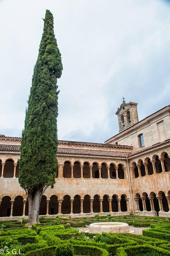 El cipres y el jardin del claustro romanico de santo domingo de Silos
