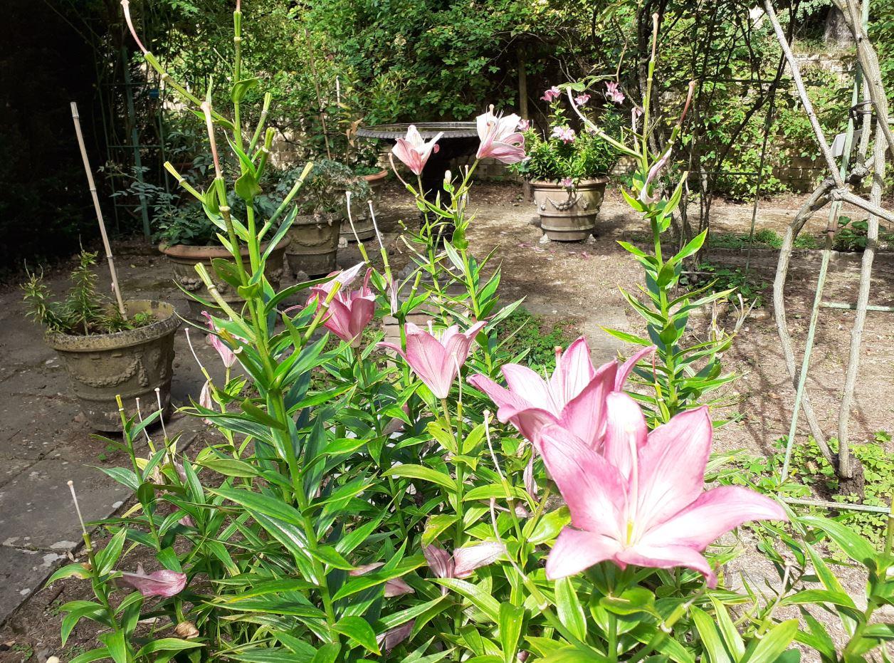 jardin la bonne maison mulatière lyon