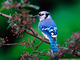 nice wallpapers | birds wallpapers