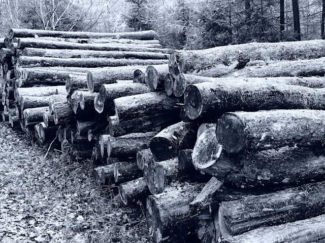 Ein Stapel Baumstämme