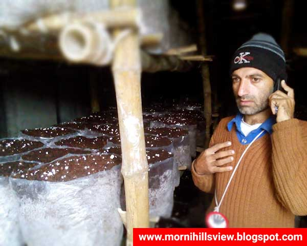 Fungi Culture Business is 1st Largest Business in Morni Hills