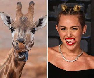 los dobles de los famosos - humor - miley cyrus