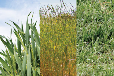 forage options in winter
