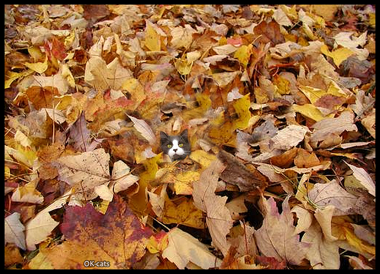 Photoshopped Cat picture • Funny cat hidden in a huge pile of giant fallen leaves. This is my new fort