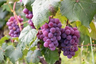 ワイン_歴史2