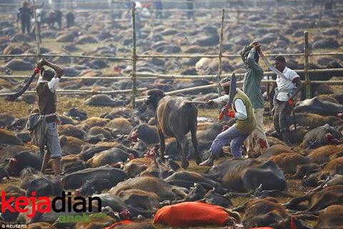 Festival Pembantaian Hewan
