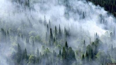 Сибирь, пожары