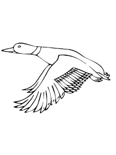 Cute Duck Migration Coloring Pages Animals