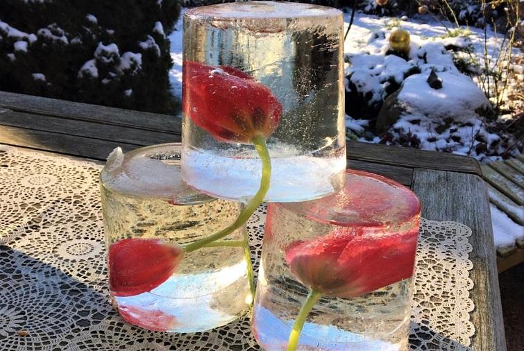 Tulpen in Eis