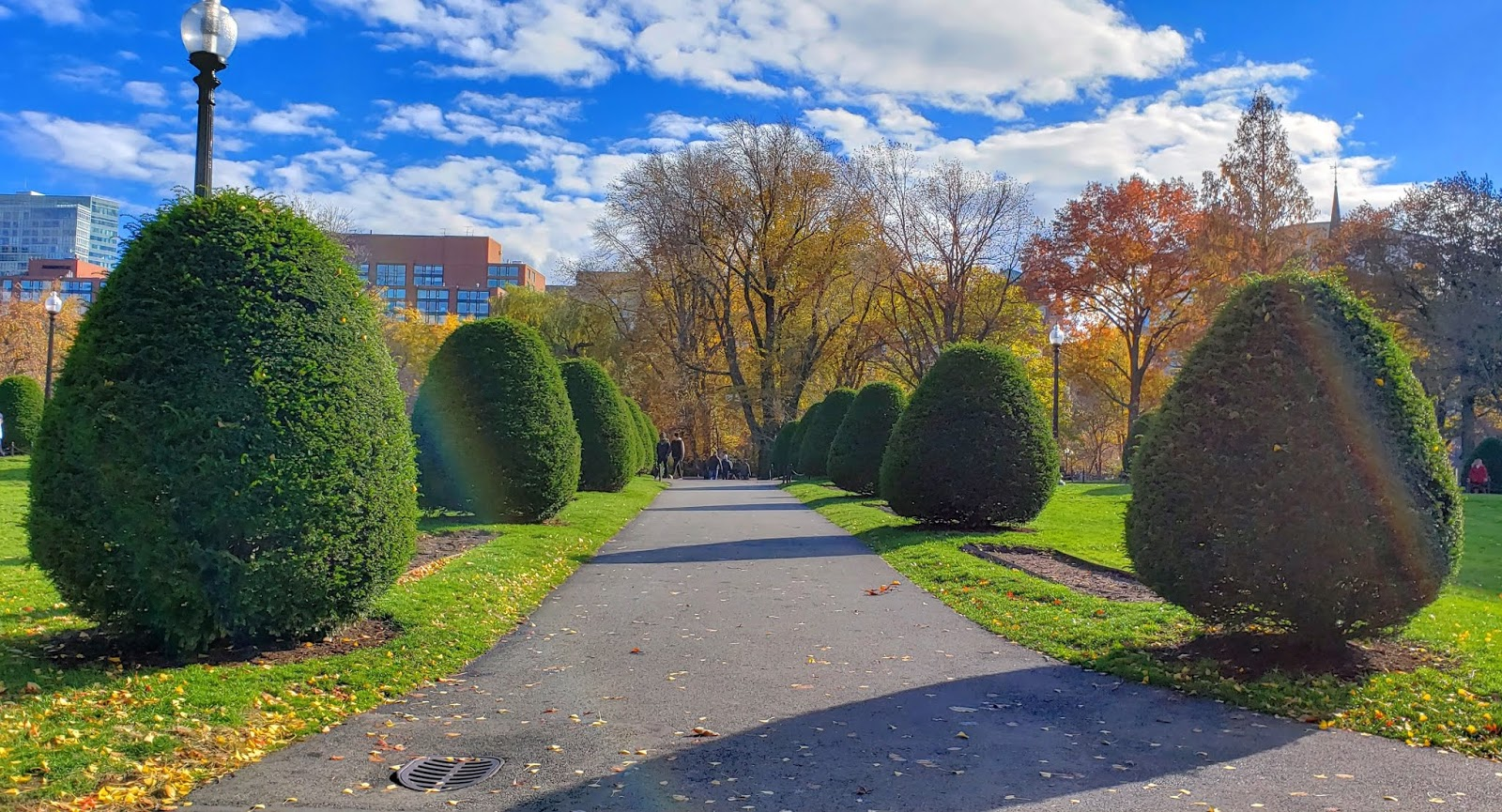 Greenery, Boston Public Garden, Boston