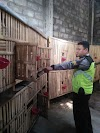 Dua Spesialis Pencuri Ayam Bangkok Tertangkap
