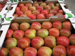 Quita México aranceles a manzana, chile, tomate y cebolla de EU