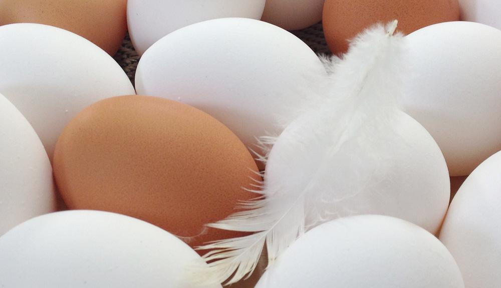 Eier mit Feder