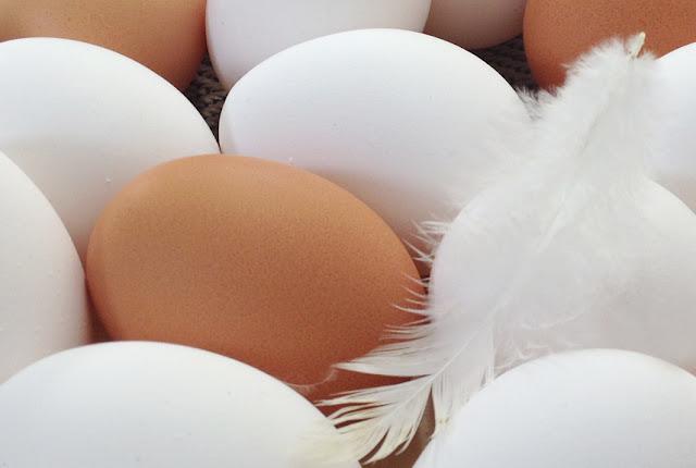 Bioeier von glücklichen Hühnern kann man mit gutem Gewissen geniessen.