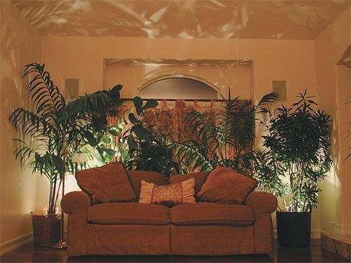 Living Room Uplighting quality silk plants blog: how to use lighting to accent your silk