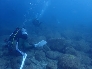 2021年7月18日の柏島ダイビング