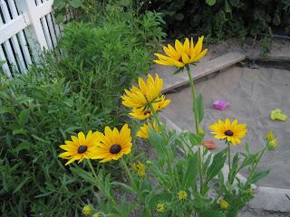 Yellow-orange flowers.